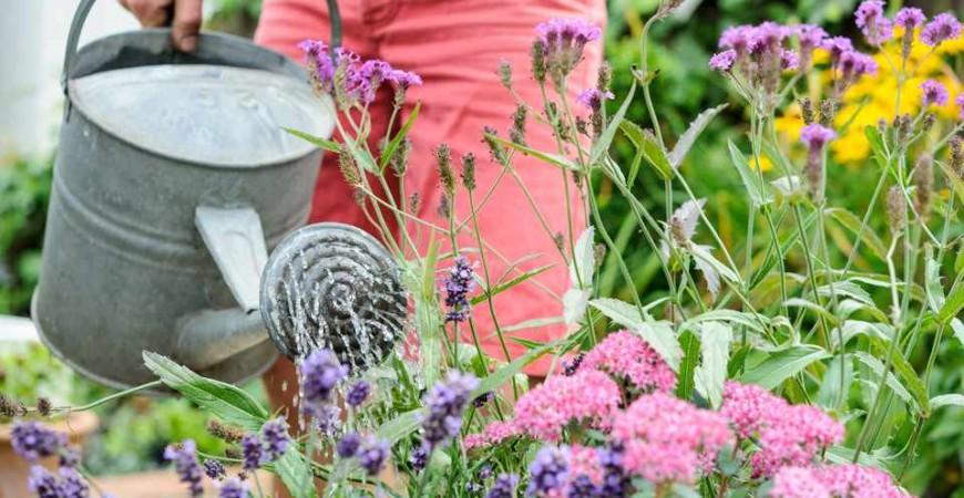 10 Idee Green per Risparmiare Acqua in Giardino