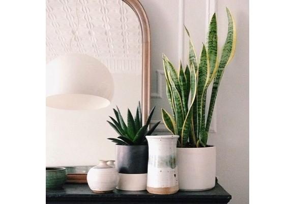 Le piante grasse più adatte in casa