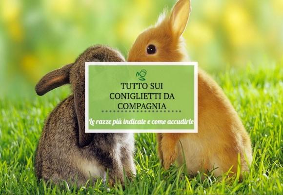 Tutto quel che c'e da sapere sulla cura dei coniglietti domestici