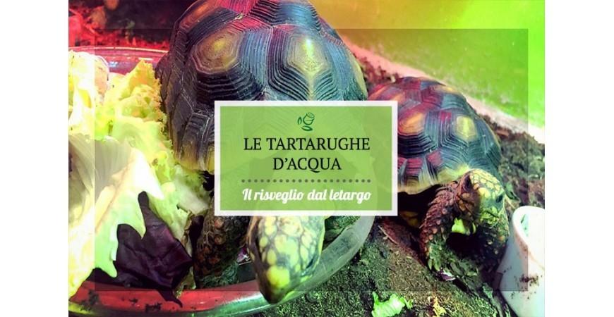 Come curare le tartarughe d'acqua dopo il letargo I consigli di Rosaflor