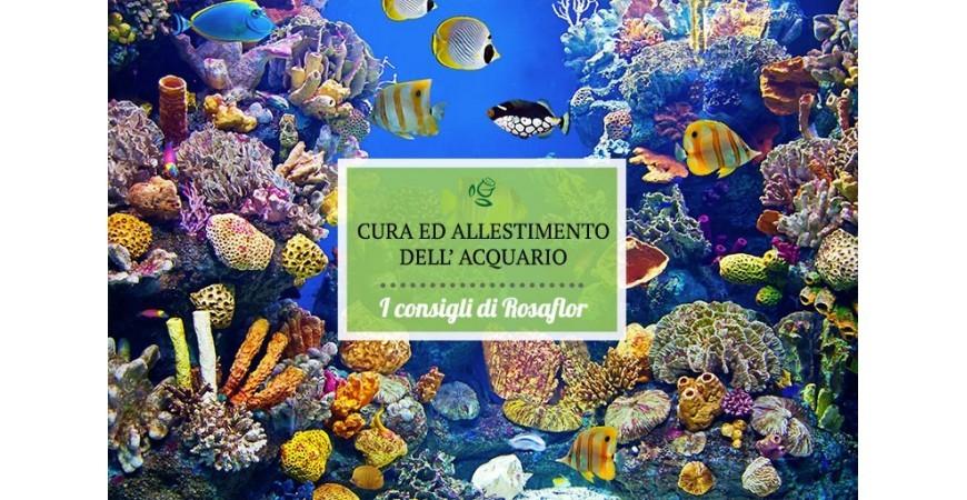 Cura e allestimento dell'acquario | Crea il tuo piccolo mondo subacqueo.