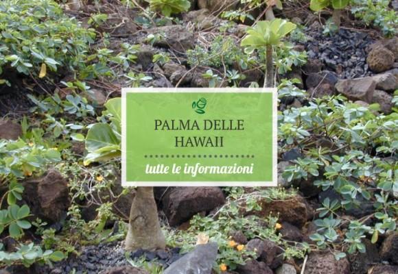 La Palma delle Hawaii