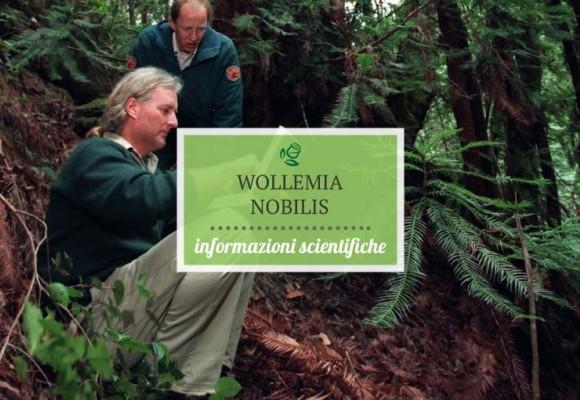 Informazioni scientifiche sulla pianta di Wollemi Pine – Wollemia nobilis