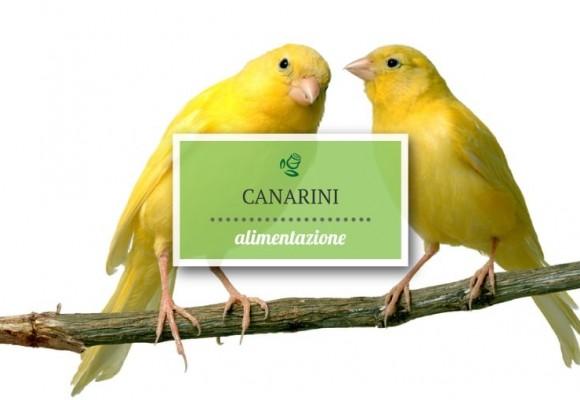 L'alimentazione dei canarini nella stagione riproduttiva