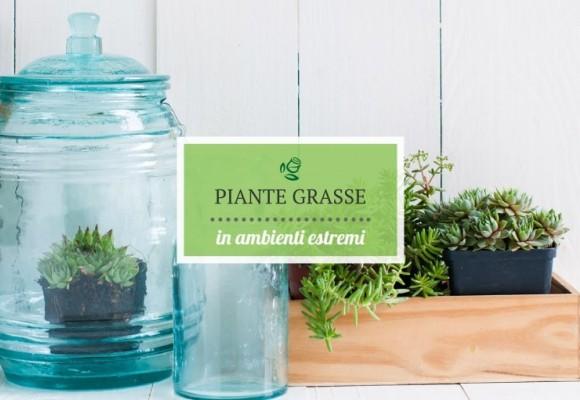 Piante Grasse in ambienti estremi