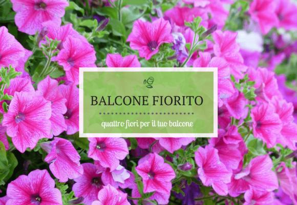Quattro fiori per il balcone
