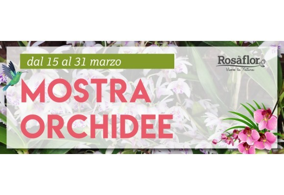 Mostra Orchidee