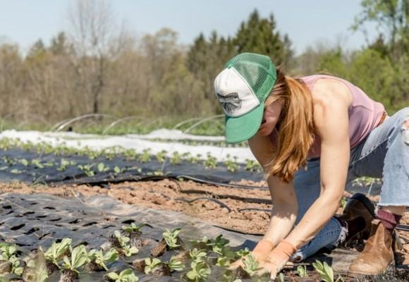 Quale concime usare: il fertilizzante giusto per tipologia di piante