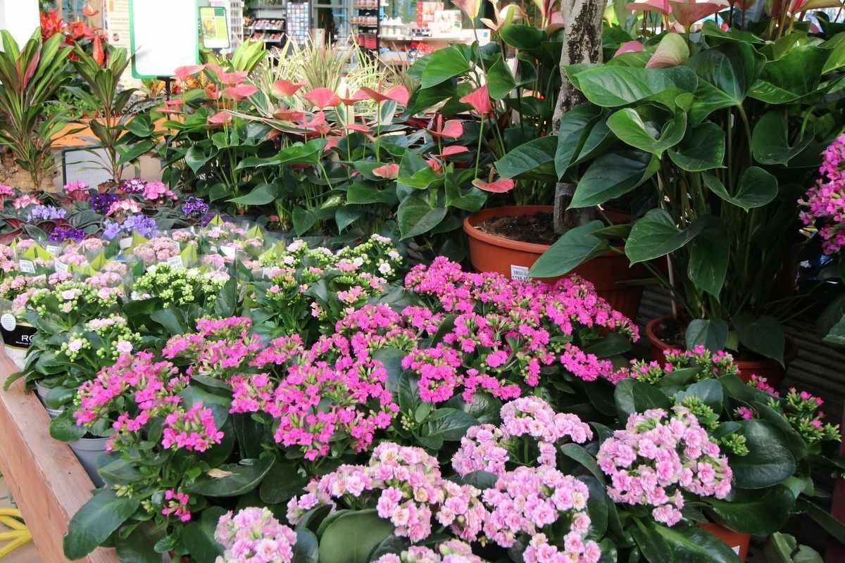 vendita piante casa marostica