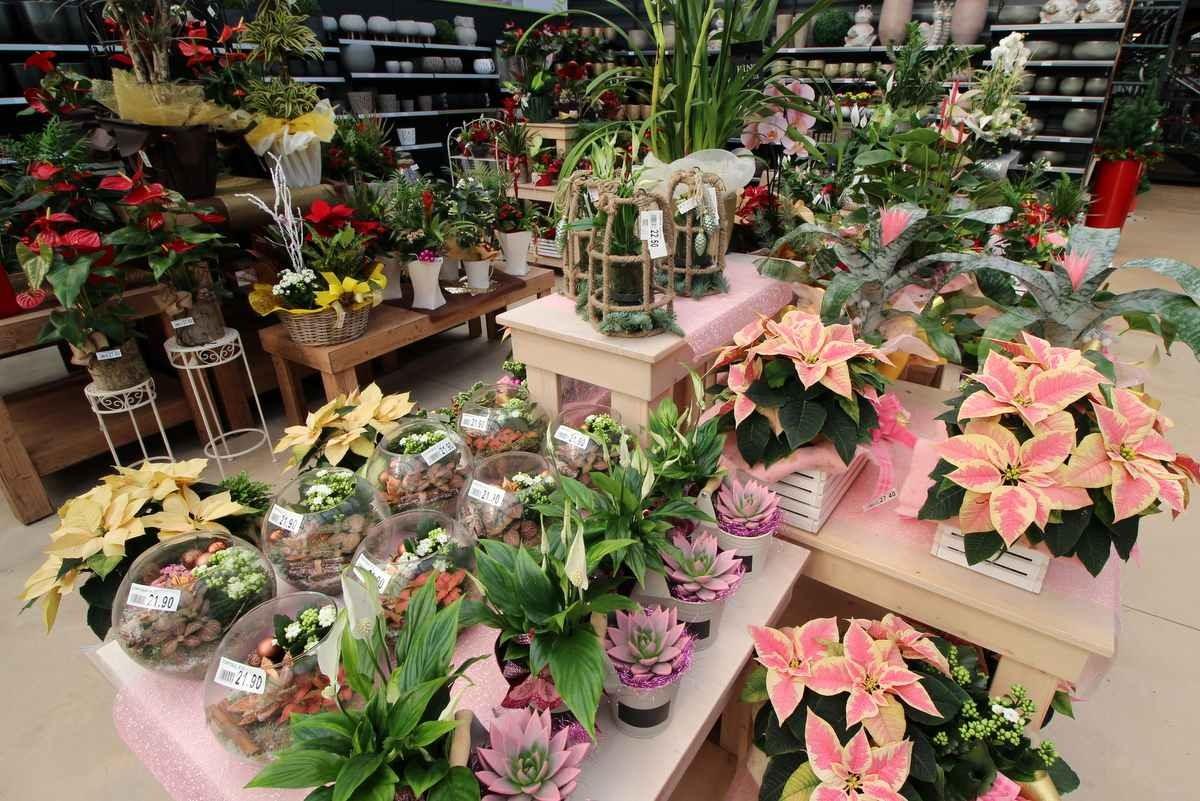 vendita composizioni piante bassano